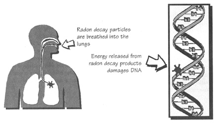 radon health risks